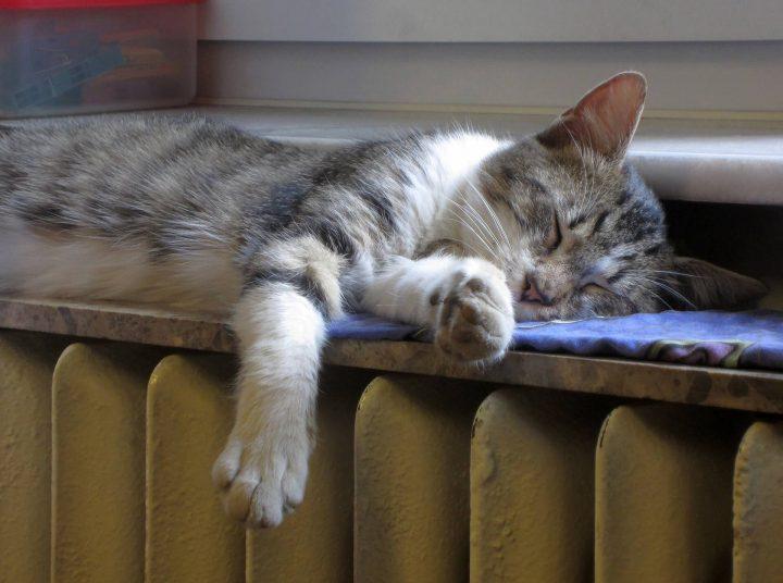 chat qui dort sur un radiateur